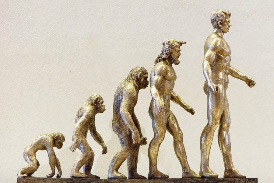 künstlerische Darstellung der Evolution des Menschen