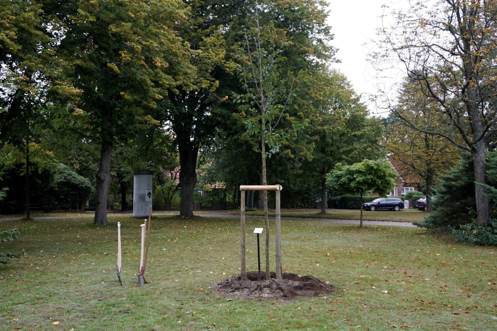 Demokratiebaum zum 30. Jahrestag der Wiedervereinigung