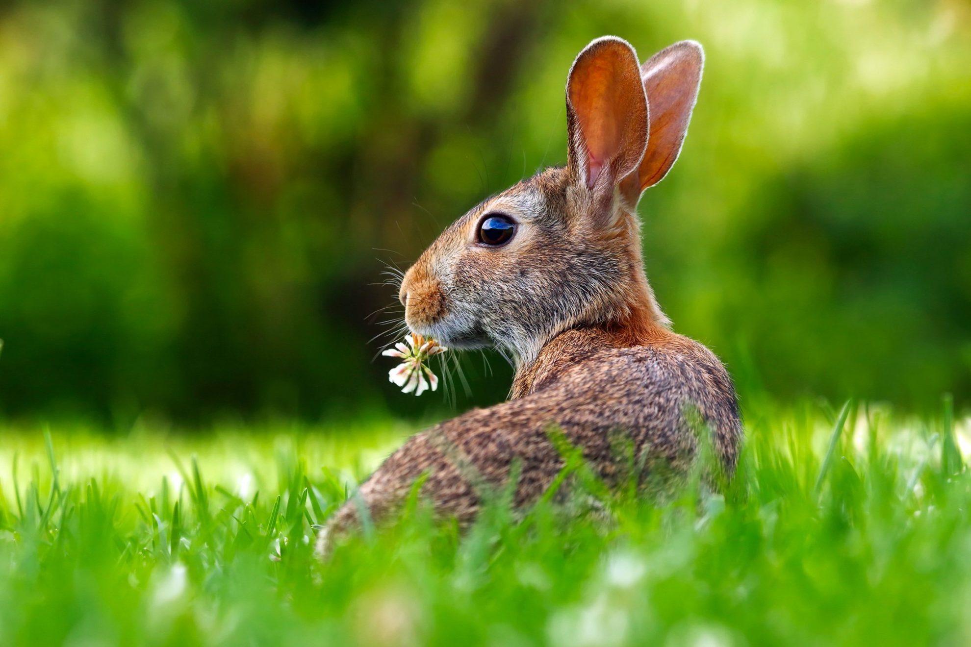 Kaninchen auf einer Wiese, Ostern 2021